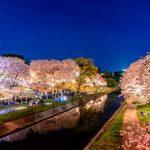 Keindahan Hanami Sakura di Taman Okazaki Nagoya