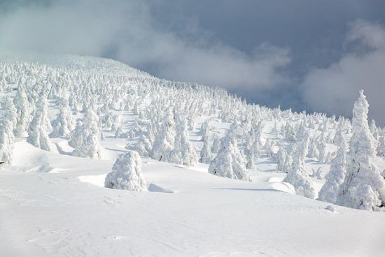 Keindahan Musim Dingin di Jepang Zao