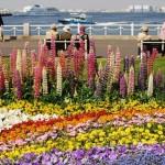 Keindahan Yamashita Park di Yokohama