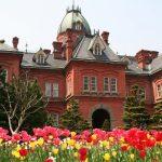 Keindahan bunga tulip di Former Hokkaido Government Office