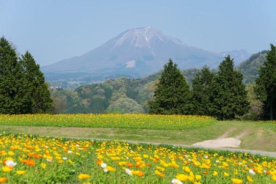 Keindahan kebun bunga Tottori Hanakairo