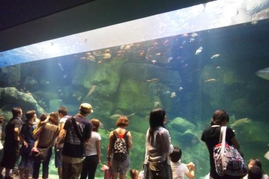 Kolam besar di Miyajima Aquarium