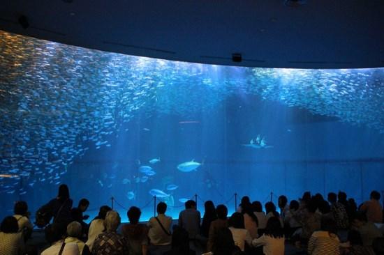 Kolam raksasa Akuarium Nagoya