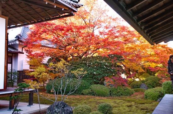 Kuil Terindah di Kyoto Kuil Genkoan di musim gugur