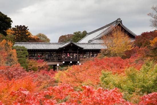 Kuil Terindah di Kyoto Kuil Tofukuji di musim gugur