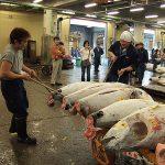 Lelang ikan tuna di Tsukiji Market