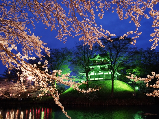 Info Wisata di Niigata Light up bunga sakura di Kastil Takada