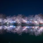 Light up di Garyu Park saat festival bunga sakura