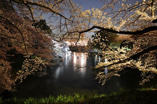 Malam hari di taman Chidorigafuchi