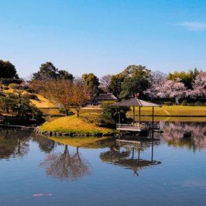 Melihat hanami sakura di Taman Korakuen