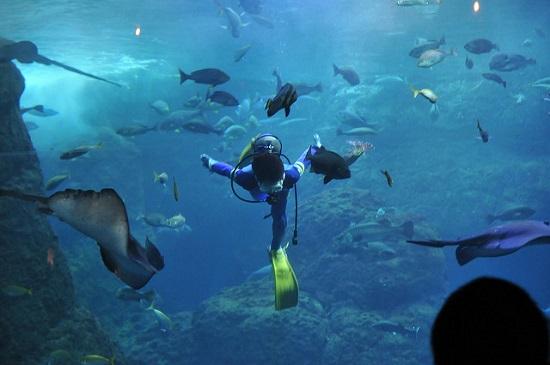 Melihat ikan di Shin Enoshima Akuarium
