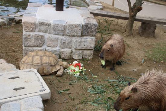 Memberi makan hewan di Harvest Hill Osaka