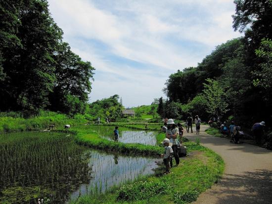 Menanam di sawah Taman Funabashi Andersen