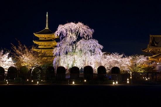 Mengunjungi Kuil Toji Kyoto di malam hari