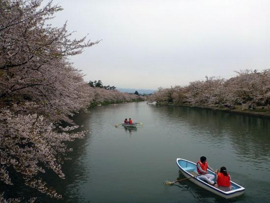 Menikmati bunga sakura dari atas perahu di kanal Kastil Hirosaki