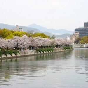 Menikmati hanami di Peace Memorial Park Sakura 2020