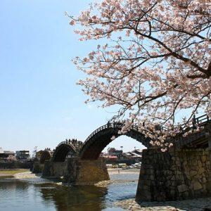 Menikmati hanami sakura di Kintai Bridge