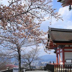 Menikmati hanami sakura di Kuil Kiyomizudera