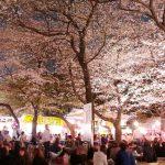 Menikmati hanami sakura di Kuil Yasukuni Jinja