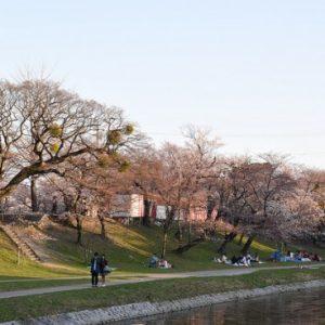 Menikmati pemandangan sakura di Kastil Okazaki