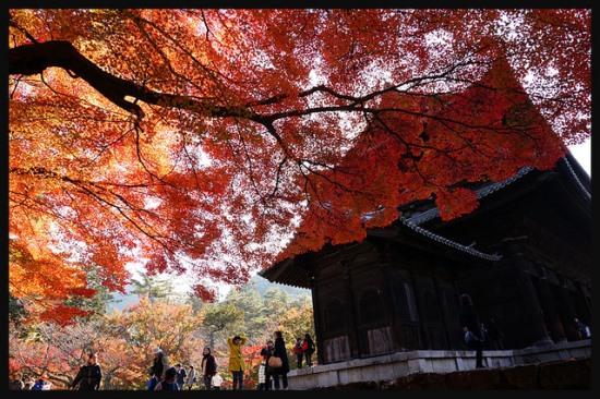 Momiji Jepang 2017 Kuil Nanzenji Kyoto