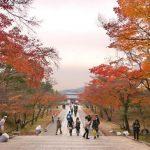 Momiji musim gugur di Kuil Ninnaji Kyoto