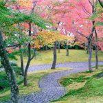 Momiji musim gugur di Museum Seni Hakone