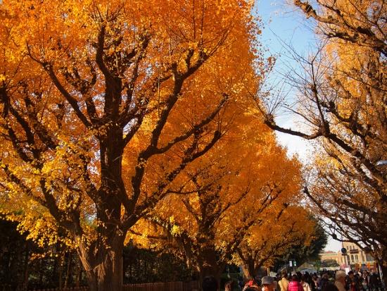 Momiji musim gugur di Taman Jingu Gaien