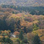 Musim Gugur di Hakone dari Hakone Ropeway