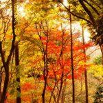 Musim gugur di Gunung Takao Tokyo