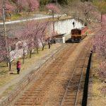 Musim semi di jalur Kereta Wisata Watarase