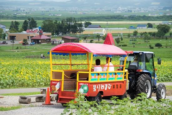 Naik kereta berkeliling melihat Festival Bunga Matahari Hokuryu