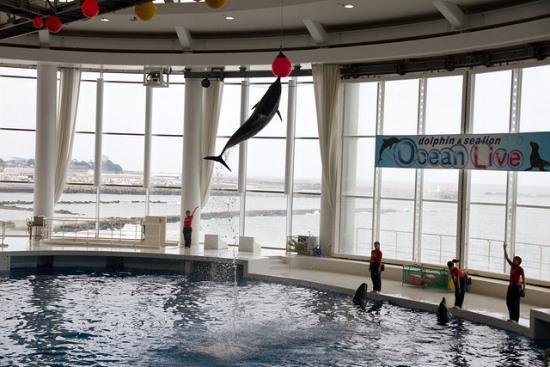 Ocean Live Show di Aqua World Oarai