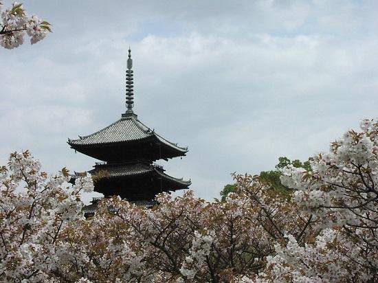Pagoda Kuil Ninnaji waktu Ninnaji Sakura 2020