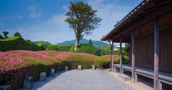 Panorama Kebun di Chiran