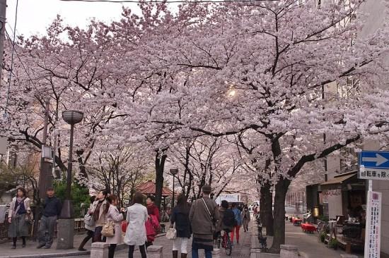 Pemandangan Gion Shirakawa Sakura 2020