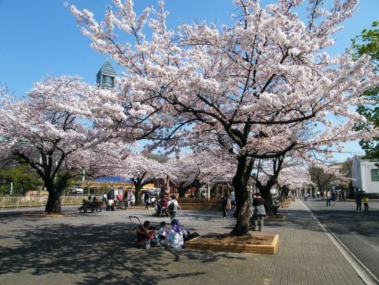 Pemandangan Higashiyama Park Sakura 2020
