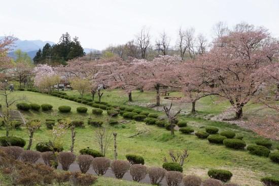 Pemandangan Hitsujiyama Park Sakura 2020