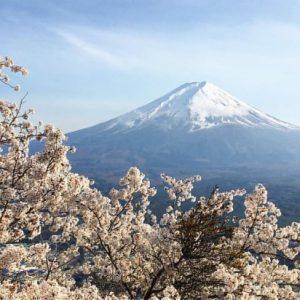 Pemandangan Kawaguchiko Lake Sakura 2020