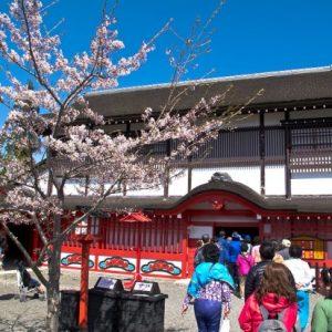 Pemandangan Noboribetsu Sakura 2020