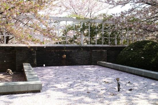 Pemandangan Oji Zoo Sakura 2020