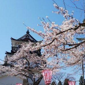 Pemandangan Sakura Yokote Park