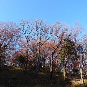 Pemandangan Sayama Park Sakura