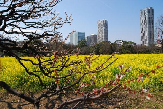 Pemandangan Taman Hama Rikyu di musim panas