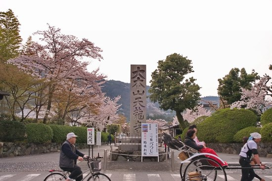 Pemandangan Tenryuji Temple Sakura 2020