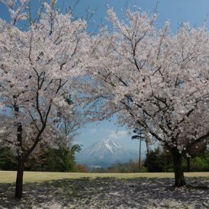 Pemandangan Tottori Hanakairo Sakura 2020