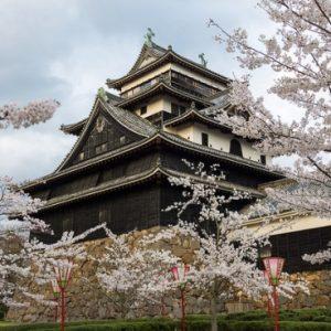 Pemandangan bunga sakura di Kastil Matsue