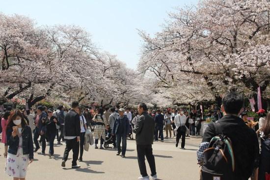 Pemandangan hanami sakura di Ueno Park Sakura 2020