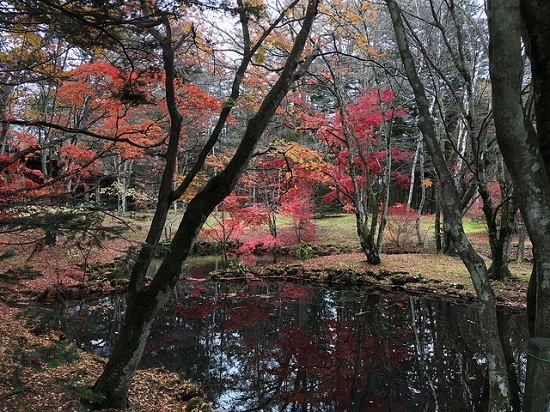 Pemandangan musim gugur di Kolam Kumoba Karuizawa