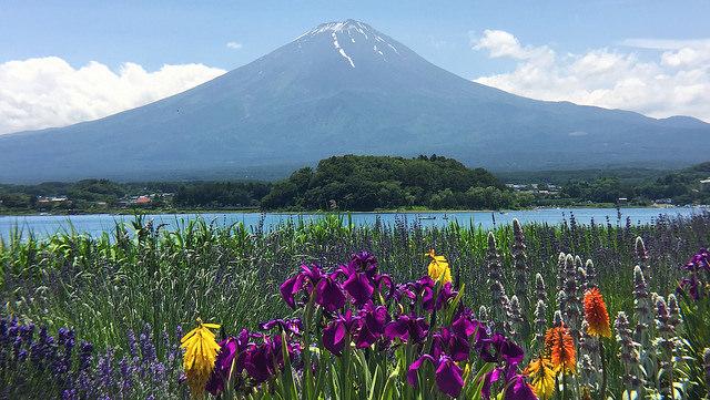Pemandangan saat Kawaguchiko Herb Festival
